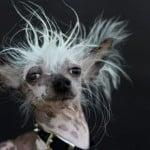 """Los perros """"más feos"""" del mundo  ¡Guau! Impresionantes."""