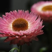 ¡Cúrate al natural! Conoce más acerca de las plantas medicinales
