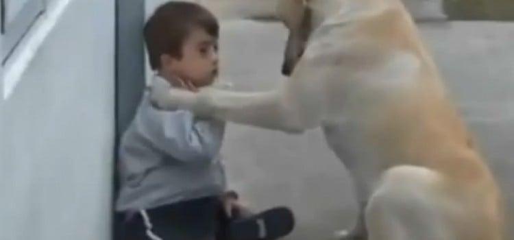 Un Perro que cuida a un niño.